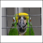 bird in jail